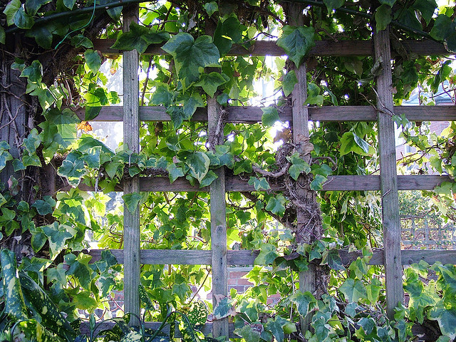 Trellis by Flickr User Pete Aston (Creative Commons)